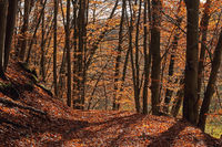 Forest path in the autumn