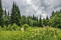 Dramatic cloudy sky over flowering meadow and coniferous forest