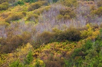 A hillside covered in colorful autumn trees and shrubs