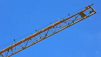 Vögel sitzen auf einem gelben Kranausleger