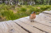 Trustful bird