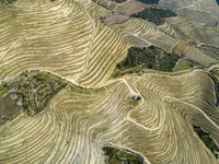 Top view on terraced vineyards Douro