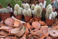 Potsherds as a decorative design for cactus collection - Upcycling