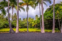 Palm trees at Punaluu Black Sand Beach on Big Island, Hawaii