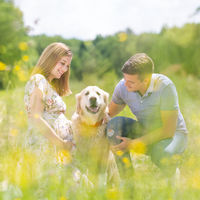 Young happy pregnant couple petting it's Golden retriever dog outdoors in meadow.