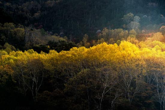 Sunlight Autumn Forest Japan