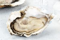 A large oyster, fresh and raw, close-up with ice