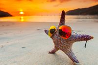 Starfish in sunglasses