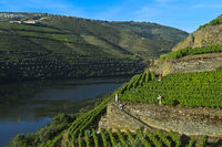 Terraced vineyards on the steep slopes of the Hell Valley, Vale do Inferno,Pinhao, Portugal