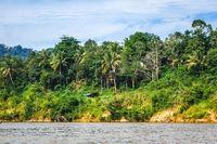 River and jungle in Taman Negara national park, Malaysia