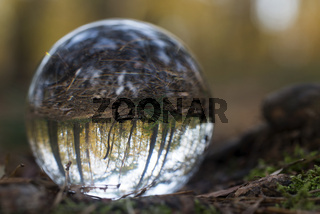 forest through a bruning glass