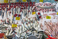 Choice of fish at a market in Istanbul