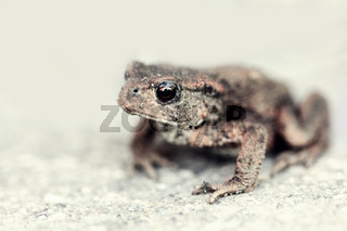 Close-up of a common toad outdoors during summer