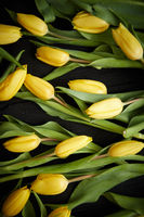 Yellow tulips placed on black table. Top view with flat lay