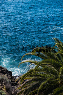 beautiful view on blue ocean water and palm tree