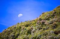 Moon over heather hills