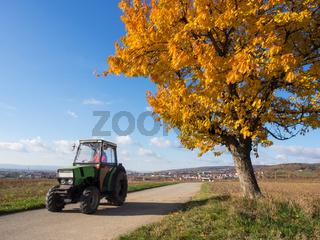 Kirschbaum mit bunten Blättern im Herbst davor ein grüner Traktor