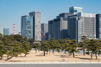 TOKYO, JAPAN - 14 FEB 2018: Chiyoda skyline and trees from Imperial palace park tight shot at daytime