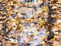 fallen leaves float in rain puddle in wheel track