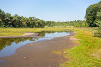 Drying dutch natural lake in  summer time