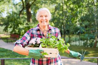 Seniorin im Garten bei Gartenarbeit
