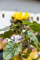 decorated sunflower as a small thank you sign
