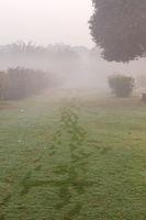 Dense fog in a green park