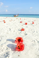 Blue sea, white sands and red Hibiscus flowers