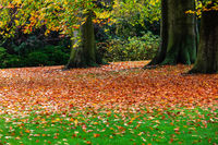 autumn leaves of trees