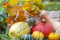 Pumkin and squashes wit jack o'lantern at halloween in garden