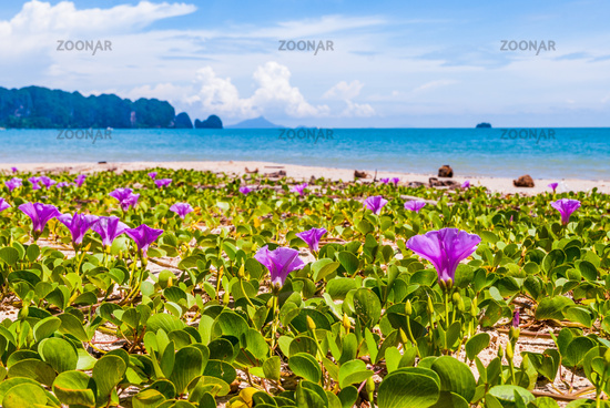 Flowers at Krabi beach, Thailand