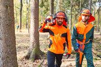 Zwei Holzfäller in Schutzausrüstung mit Motorsäge