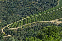 Tongue-shaped vineyard in the port wine region Alto Douro near Pinhao, Douro Valley, Portugal