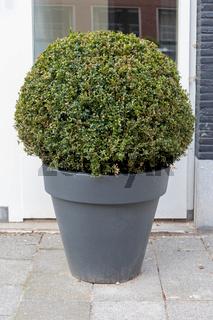 Bush Plant Pot