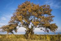 Trees on the Borner Holm