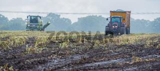 Maisernte, Maishäcksler in Aktion, Erntewagen mit Traktor