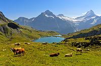 Mountain lake Bachalpsee and peaks Wetterhorn and Schreckhorn, Grindelwald, Switzerland