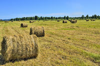 Agricultural summer landscape with hay bales in rolls