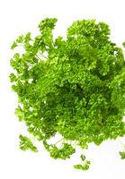 Fresh green parsley