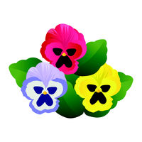 Vector illustration of blue pink and yellow pansy flowers with green leafs on white background.