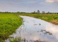 Water meadow, of the River Elbe, Hetlingen, Haseldorfer Marsch, Schleswig Holstein, Germany