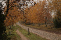 Path through the Lueneburg Heath