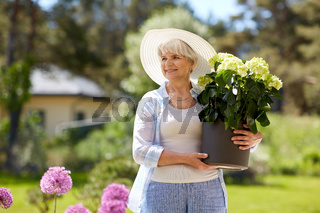 old woman with hydrangea flower at summer garden