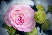 Beautiful rose flower in a bouquet close-up.