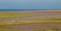 Salt marshes on Juist