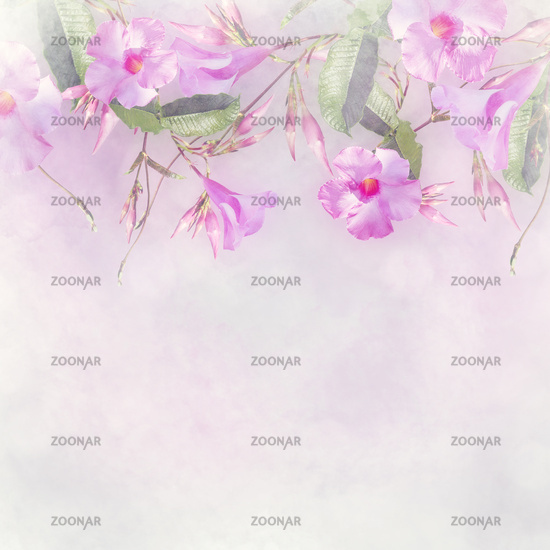 Pink Dipladenia flowers for background