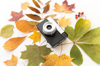 film camera and autumn leaves on white background