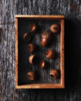 Acorn in a wood shadow box