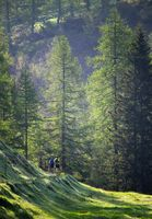 Two Trail Runners in the Forest