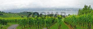 Weinanbau am Zürichsee